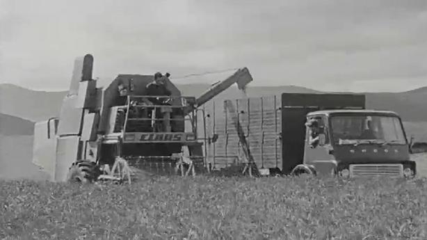 Grain Harvest (1972)