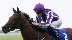 Hydrangea will go in the King George VI And Queen Elizabeth Stakes at Ascot