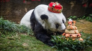Basi had lived at a zoo in southeastern China since being rescued from the wild