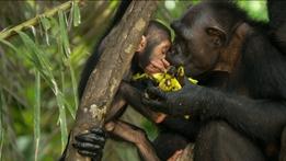 Natural World: My Congo