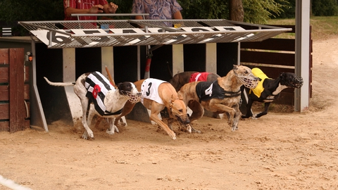 Greyhound Doping | Claire Byrne Live