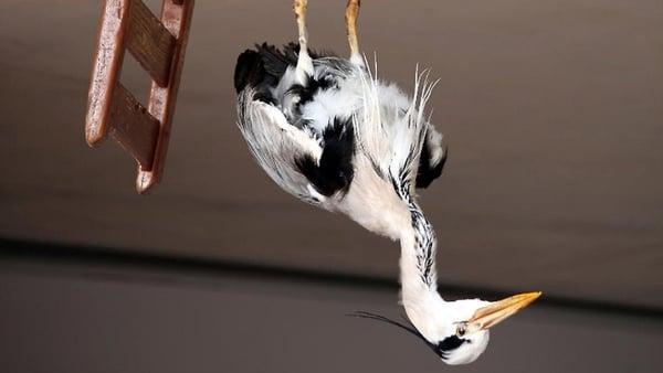 Detail from Heron (2010), by Dorothy Cross. Image via Kerlin Gallery, Dublin