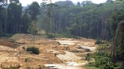 Deforestation caused by illegal gold mining in the Brazilian rainforest