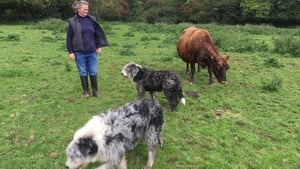 Farmer Jill Smith with one of the remaining members of her dairy herd