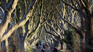 The tunnel of beech trees, or Dark Hedges, is a big draw for tourists