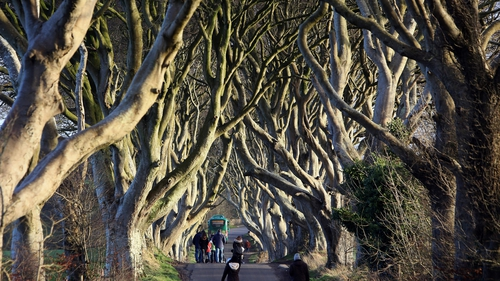 Dark Hedges: Vehicles to be banned from attraction amid conservation fears
