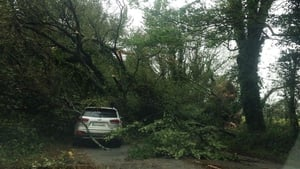 A tree fell on a car near Midleton in County Cork