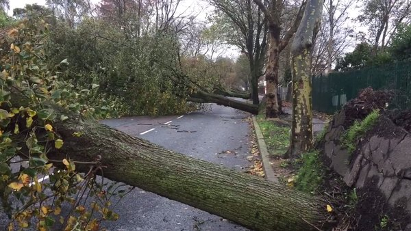 Trees down on Centre Park Road in Cork
