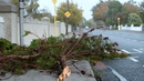Fallen trees are blocking roads and paths across the country