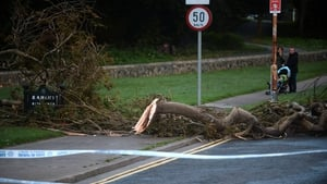 A tree down on Watermill Road in Raheny, Co Dublin