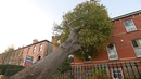 Storm Ophelia downed trees and power lines around the country