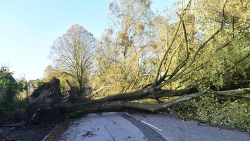 Storm brought down trees across the country