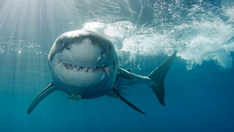 World's Deadliest: Jaws And Sins