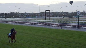 Thomas Hobson from the Willie Mullins gallops on the course proper during a trackwork session at Flemington Racecourse