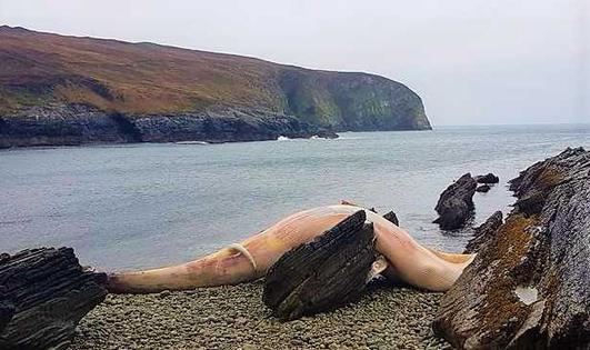 Nóra Ní Fhlannagáin.
