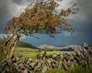 Gerard McCullagh, The Burren, Co. Clare