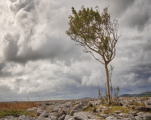 Denis Grehan, Burren National Park, Co Clare