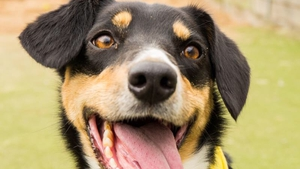 Dogs Trust reported a 58% increase in the number of people who contacted them in the first three months of this year