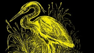 Detail from the beautiful cover image of a swan on Tramp Press's reissued The Unforeseen
