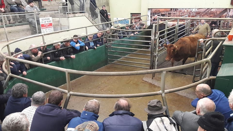 An Auction Taking Place At Kenmare Mart Pic Facebook