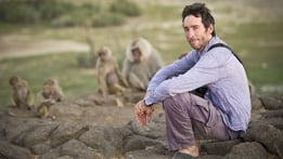 Natural World: Living with Baboons