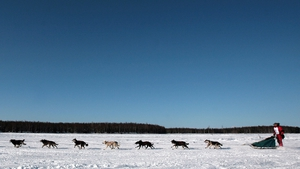Musher Lance Mackey and his team cross the frozen Willow Lake during the Iditarod race. Photo: Jim Watson AFP/Getty Images