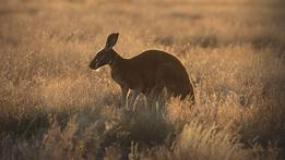Sky Safari: Australia