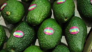 More patients are presenting at hospitals with hand injuries caused by cutting an avocado