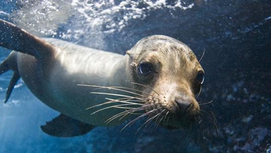 Fishermen plea for a cull of seals
