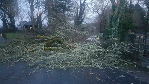 A downed tree in Ennistymon (Pic: @GardaTraffic
