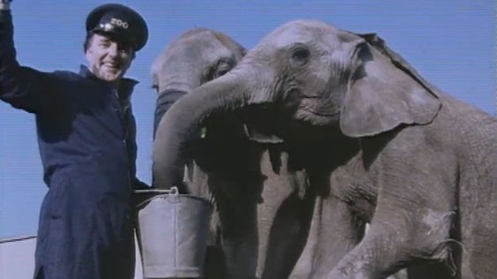 Mike Murphy at Dublin Zoo (1983)