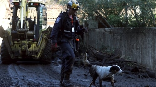 Rescue dogs form part of the search operations in Montecito