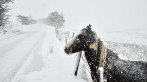 There were heavy falls of snow in Northern Ireland leading to the closure of many schools
