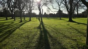 Finalist: Paul Callan, National Botanic Gardens, Dublin