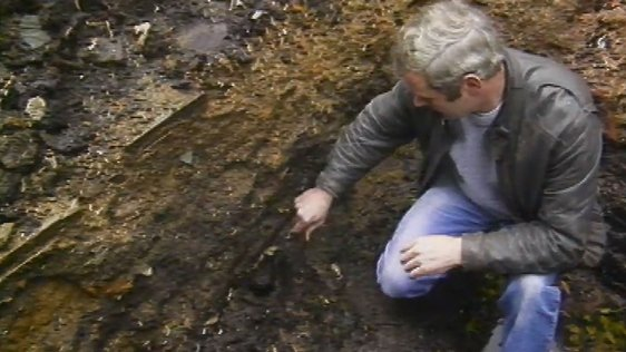 Wexford Archaeology (1988)