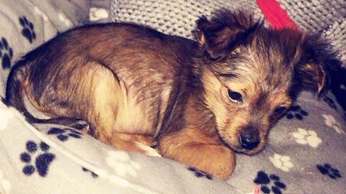 Puppy 'Bludgeoned With Hammer And Put Into Microwave'