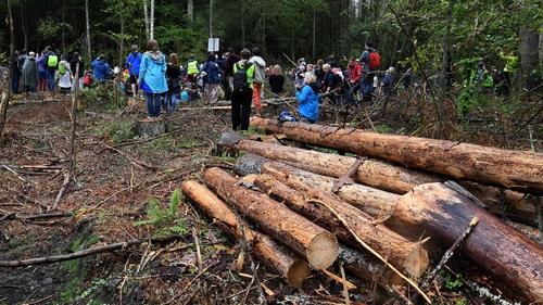 Poland logging unlawful — European Union court advisor