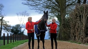 Sizing John may have a gallop at Leopardstown prior to his Gold Cup defence