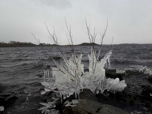 Ice tree in Crossmolina, Mayo - By Thomas Connor