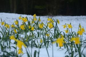 Snowy spring in St Anne's Park, Dublin. By Neil Hardy