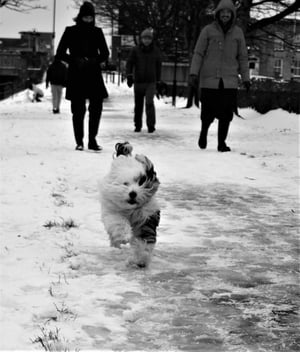 Snowswept by the Royal Canal. By Carol Conway