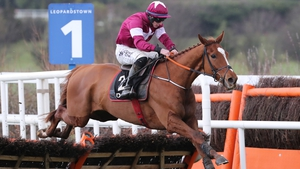 Samcro didn't disappoint at Cheltenham