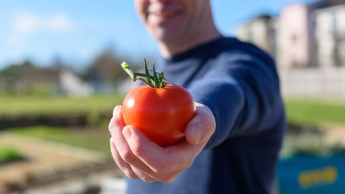 Learn how to make Garden Tomato Salsa and Tomato Pesto on Grow Cook Eat