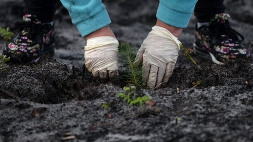 The reforestation will require the planting of about 22 million trees