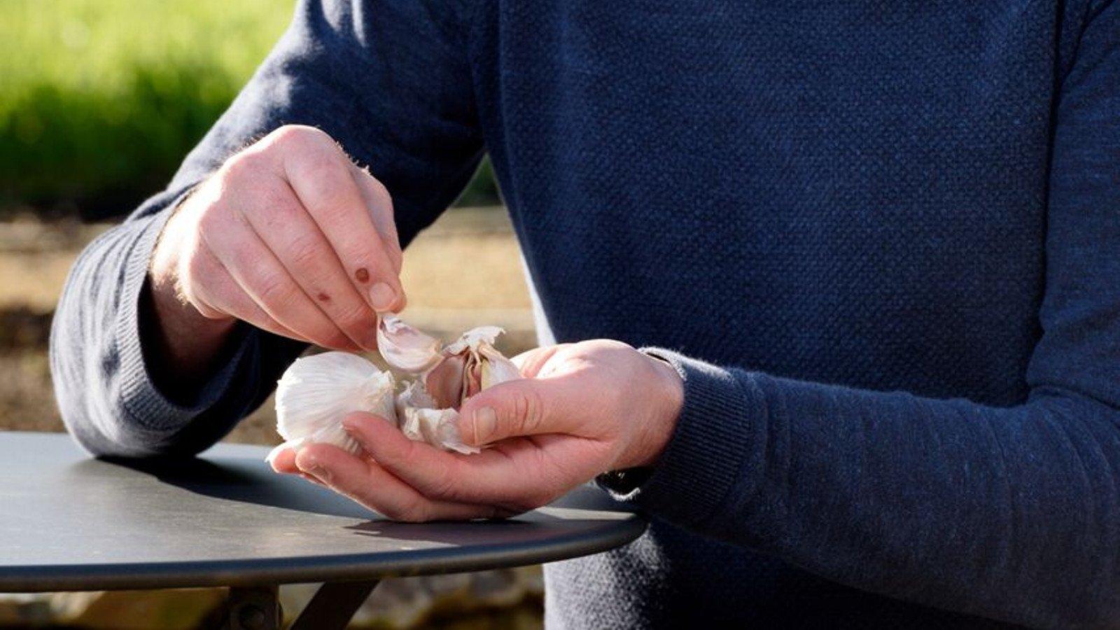 GROW COOK EAT – Garlic
