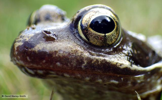 Nature File with Anja Murray - Frogs.