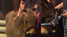 Donkey Sanctuary | The Late Late Show
