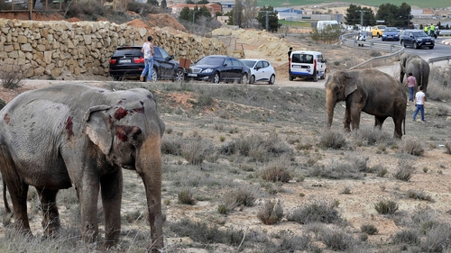 Two elephants were injured in the crash
