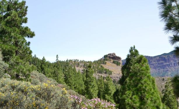 roque nublo peak view
