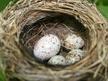Nature File - Eggs.